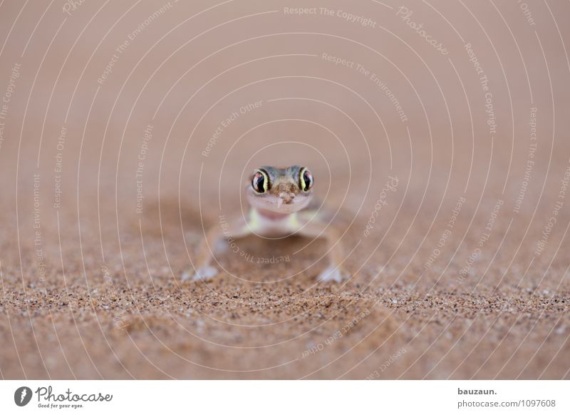 Nature Vacation & Travel Summer Animal Eyes Natural Small Sand Earth Wild animal Tourism Sit Esthetic Trip Observe Adventure