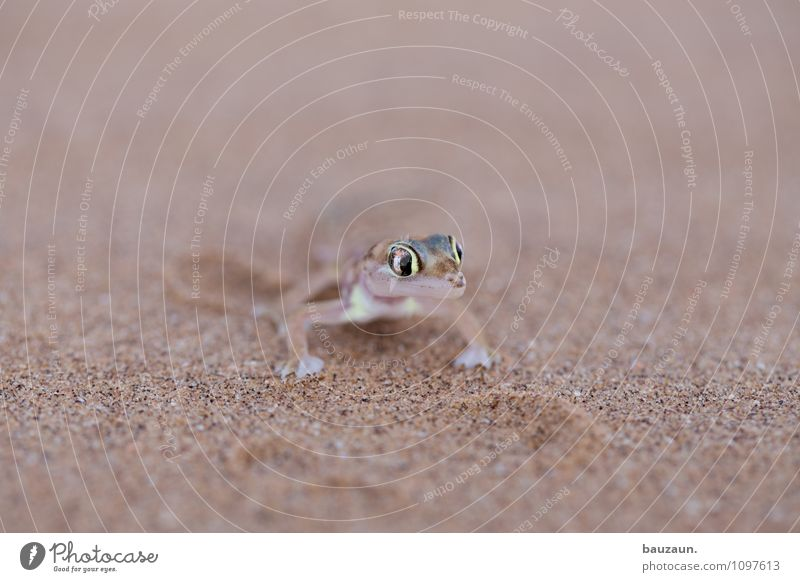 Nature Vacation & Travel Animal Eyes Natural Exceptional Sand Earth Wild animal Tourism Sit Esthetic Trip Observe Adventure Dry
