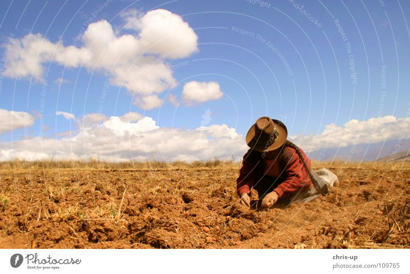 Potato harvest in Peru Lima South America Americas Market trader Market stall Winegrower Farmer Man Woman Loneliness Vacation & Travel Dark Work and employment