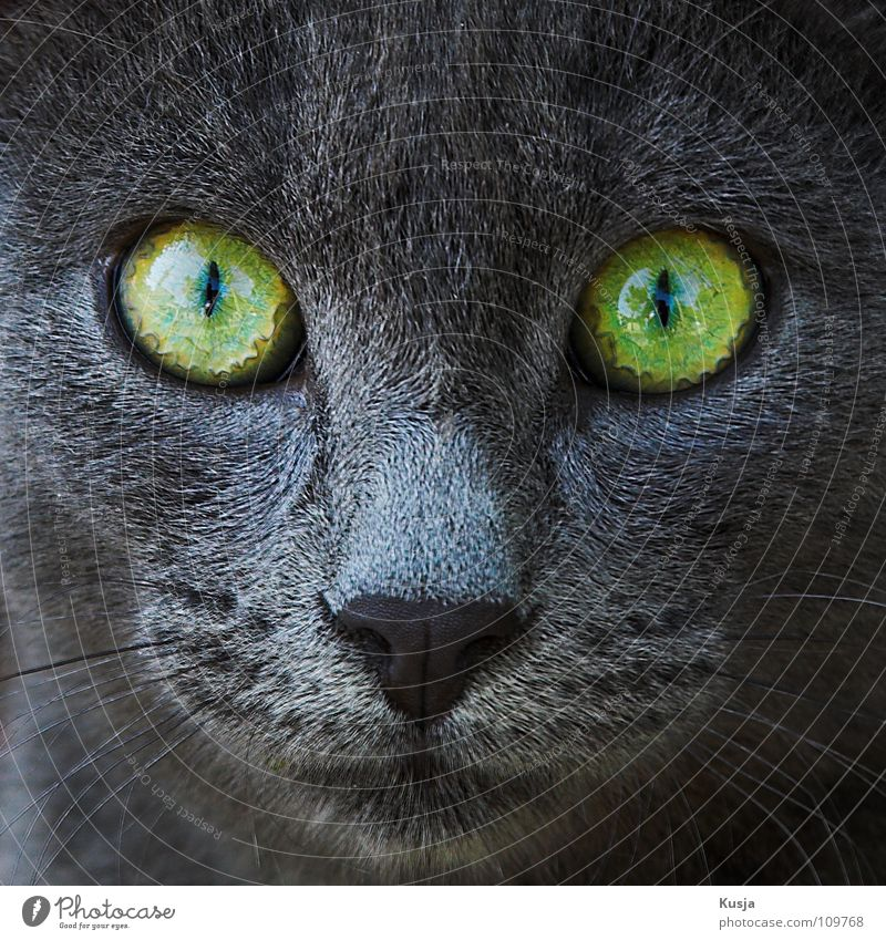 Green Gray Cat Fear Nose Mammal Hatred Snout Attack Anxious Scare Animal Hypnotic Pervasive