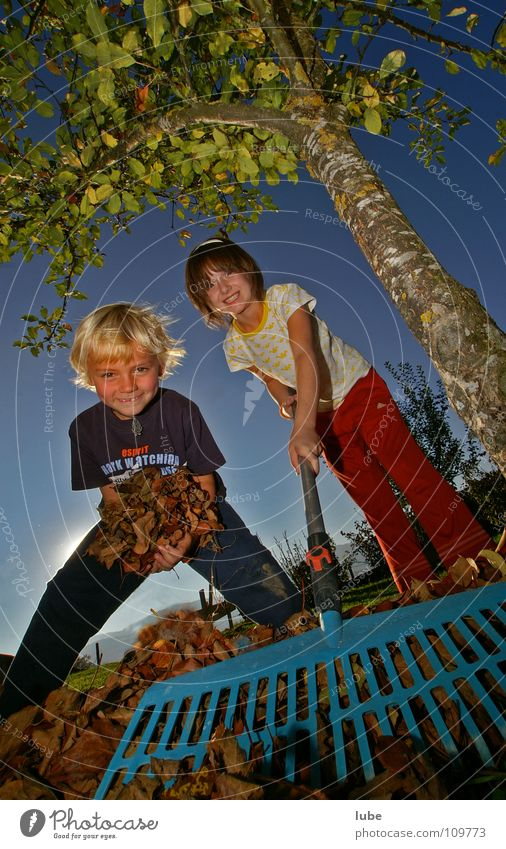 Child Tree Leaf Autumn Garden Laughter Park Human being Work and employment Autumn leaves Deciduous tree Autumnal Rake