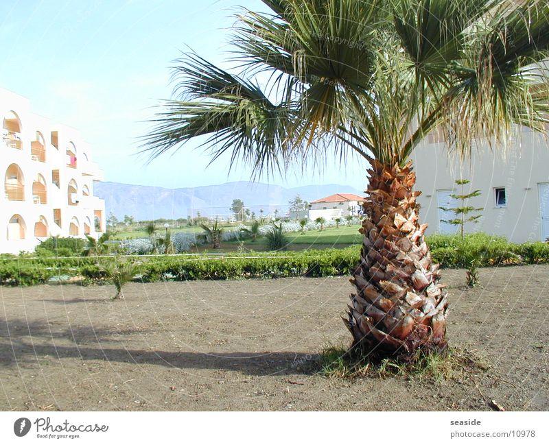 Palm tree on Crete Summer Sun