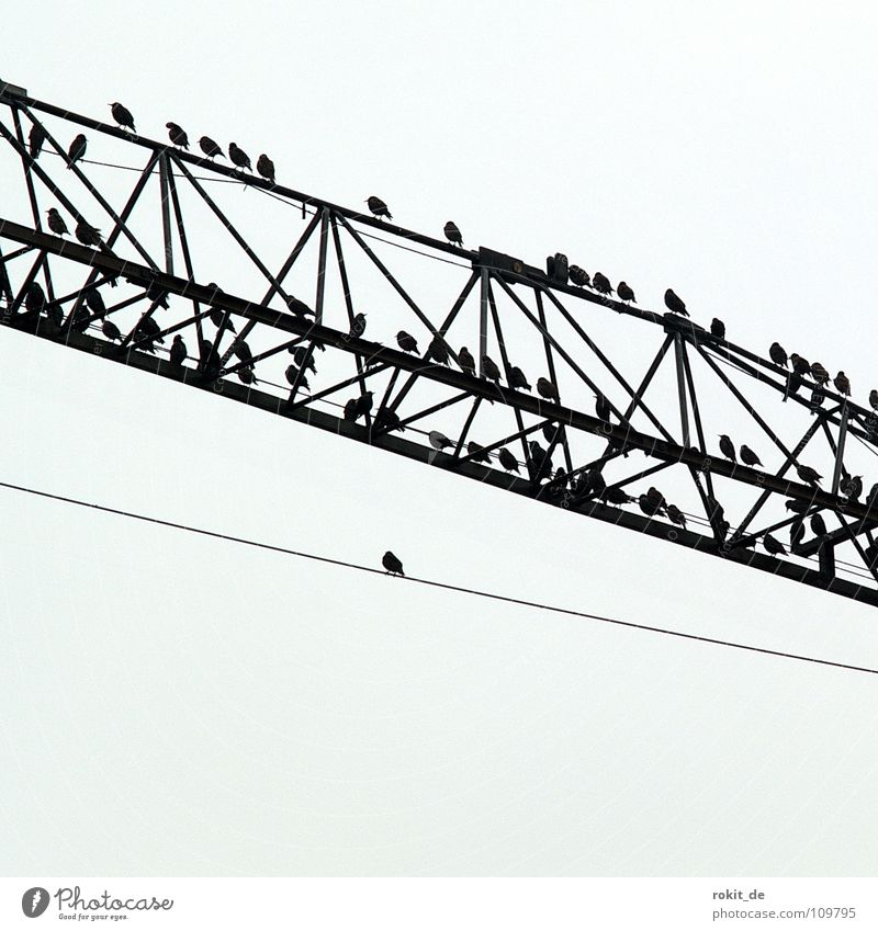 Heavy on wire Bird Starling Construction crane Crane Crossbeam Creepy Black Gray Crash Loneliness Break Individual Multiple Fear Panic Autumn assault Cable Sit