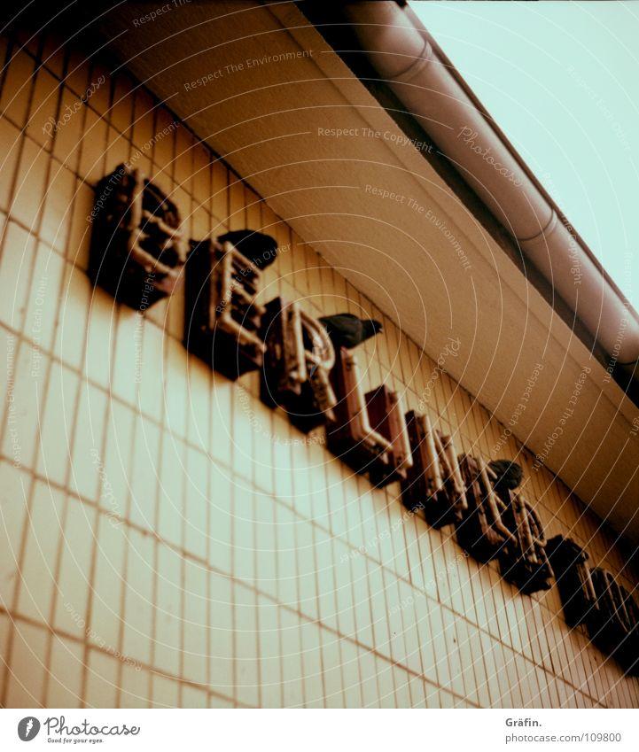 Wall (building) Berlin Bird Lighting Dirty Transport Feather Letters (alphabet) Tile Station Underground Train station Pigeon Neon light Tram Flock