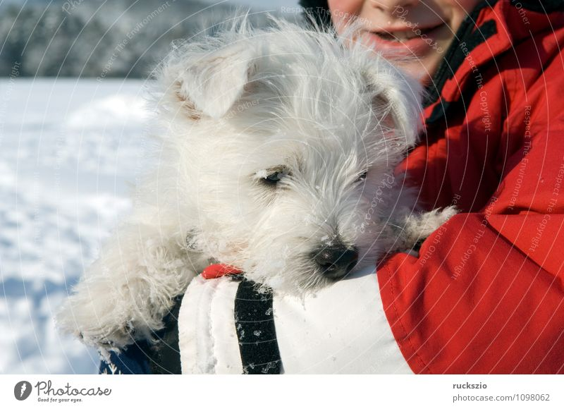 Dog Animal To enjoy Puppy Terrier Watchdog Purebred dog Highland cattle West Highland terrier