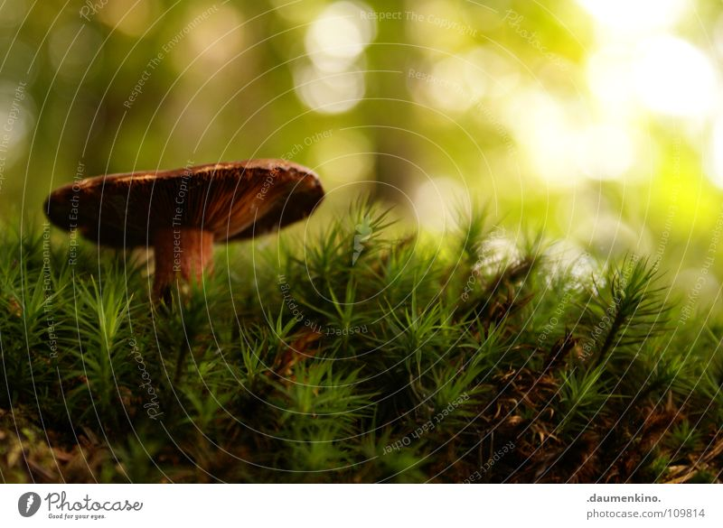 Green Beautiful Tree Sun Forest Autumn Grass Growth Stand Floor covering Blade of grass Mushroom Autumnal Woodground