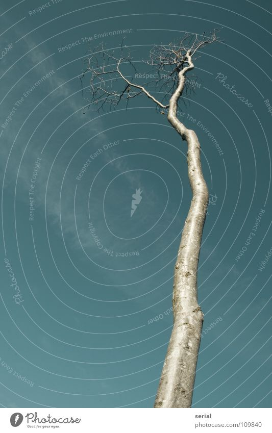 Sky Tree Clouds Cold Autumn Death Wood Glittering Perspective Thin Branch Transience Tree trunk Fine Wood grain