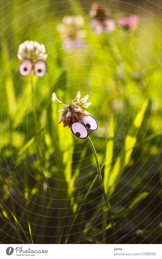 peephole Head Face Eyes Nature Plant Beautiful weather Grass Meadow Observe Dream Looking Family & Relations Colour photo Exterior shot Deserted Copy Space left