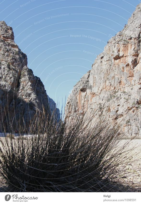 Nature Vacation & Travel Plant Landscape Environment Mountain Grass Spring Natural Gray Exceptional Brown Rock Idyll Tourism Island