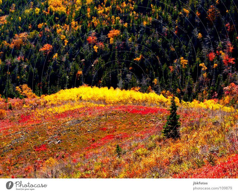 "+++<font color=""#ffff00"">-==- sync:ßÇÈâÈâ Highlands Canada Nova Scotia Autumn Indian Summer Colour Dye Landscape Reflection Atlantic Ocean Tree Fir tree"