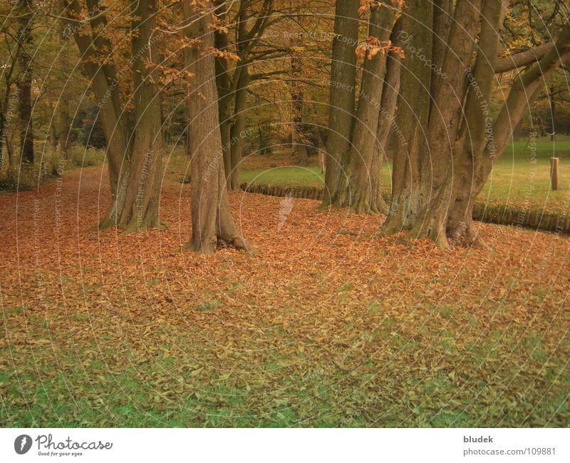 Autumn II Tree Leaf Bremen Tree trunk Branch Root civic park