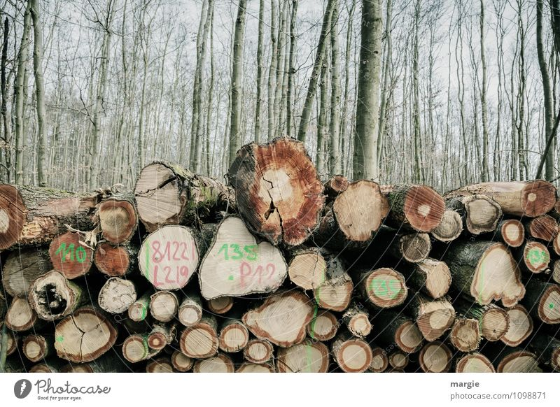 forestry Forester Lumberjack Agriculture Forestry Craft (trade) Energy industry Environment Nature Spring Climate Tree Bushes Wood Growth Dry Green Hope Sadness