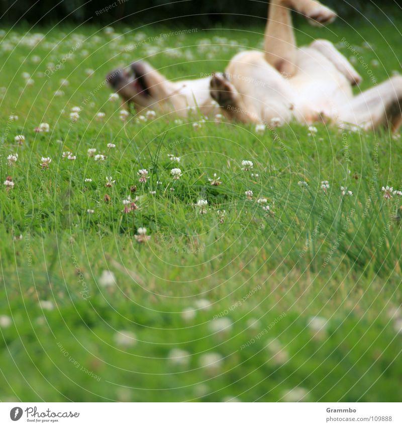 Flower Green Summer Joy Meadow Happy Dog Contentment Joie de vivre (Vitality) Pelt Mammal Magdeburg Supine position