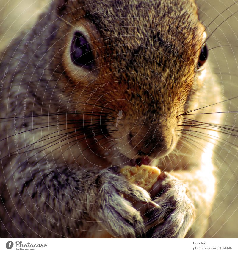 Mjam Mjam Mjam Nutrition Animal Paw To feed Small Delicious Sweet Appetite Squirrel Rodent Mammal Mjam mjam mjam Colour photo Exterior shot Animal portrait Day