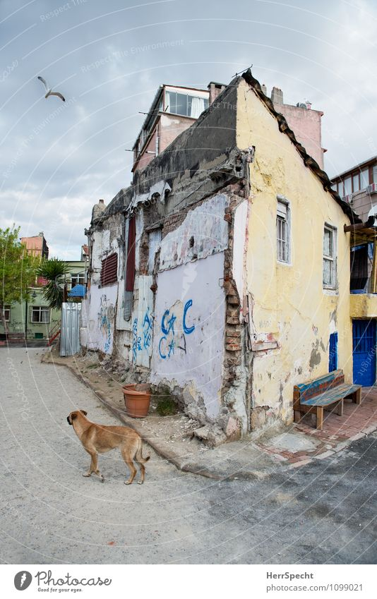 Back Street Boy Istanbul Outskirts Old town House (Residential Structure) Detached house Manmade structures Building Architecture Wall (barrier) Wall (building)
