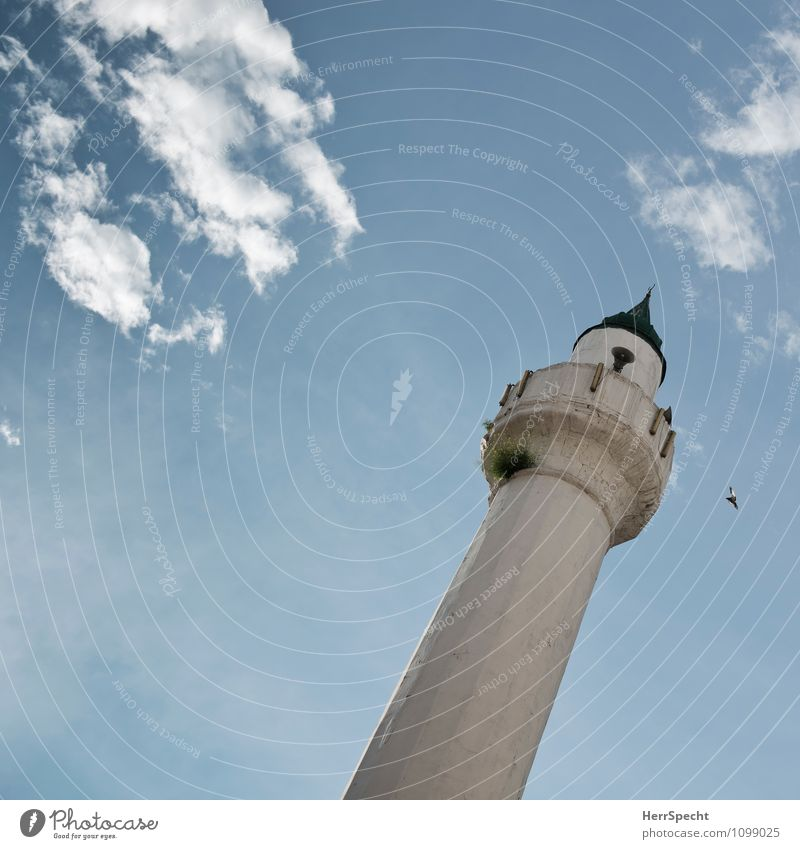 Clouds Building Religion and faith Bird Tall Sign Tower Tilt Manmade structures Downtown Old town Loudspeaker Istanbul Islam Mosque Clang