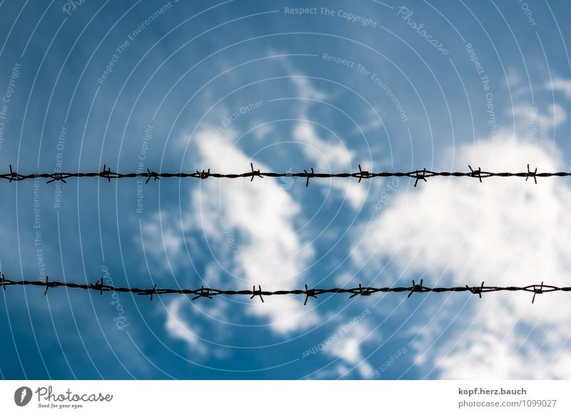 blunt Sky Barbed wire Safety Pain Fear of the future Dangerous Bans Fence Blue Barrier Closed Horizontal Line Colour photo Exterior shot Deserted Copy Space top