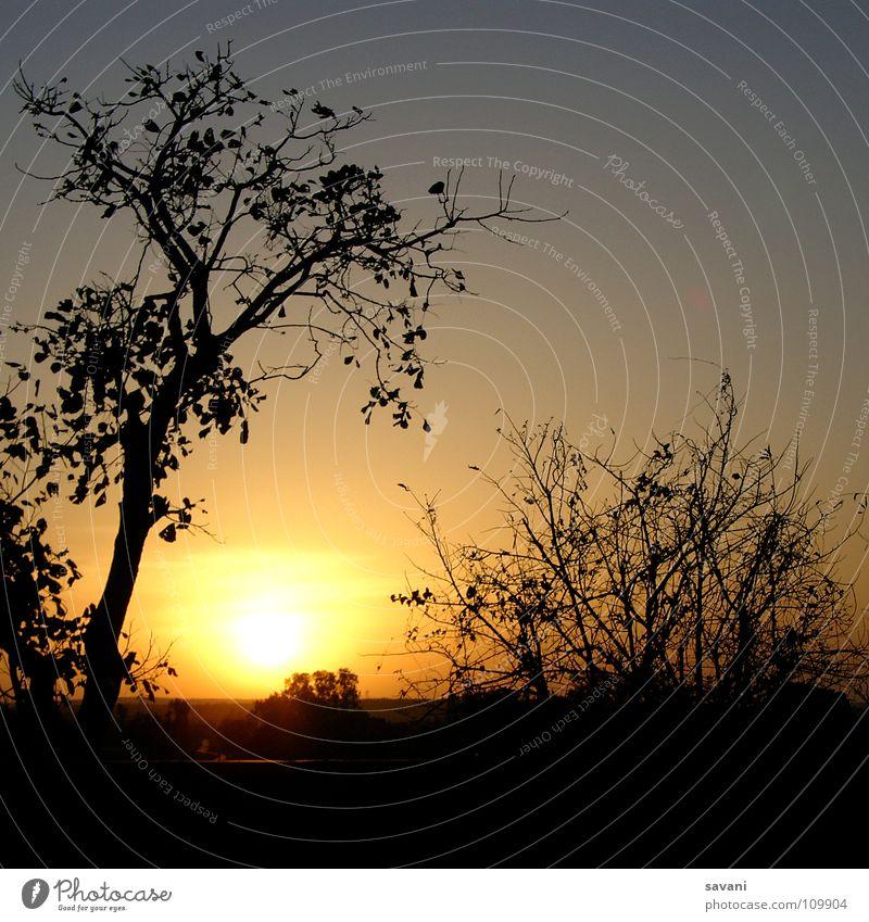 Nature Sky Tree Sun Vacation & Travel Calm Dream Sadness Landscape Romance India Ruin Dusk Frame Safari Near and Middle East