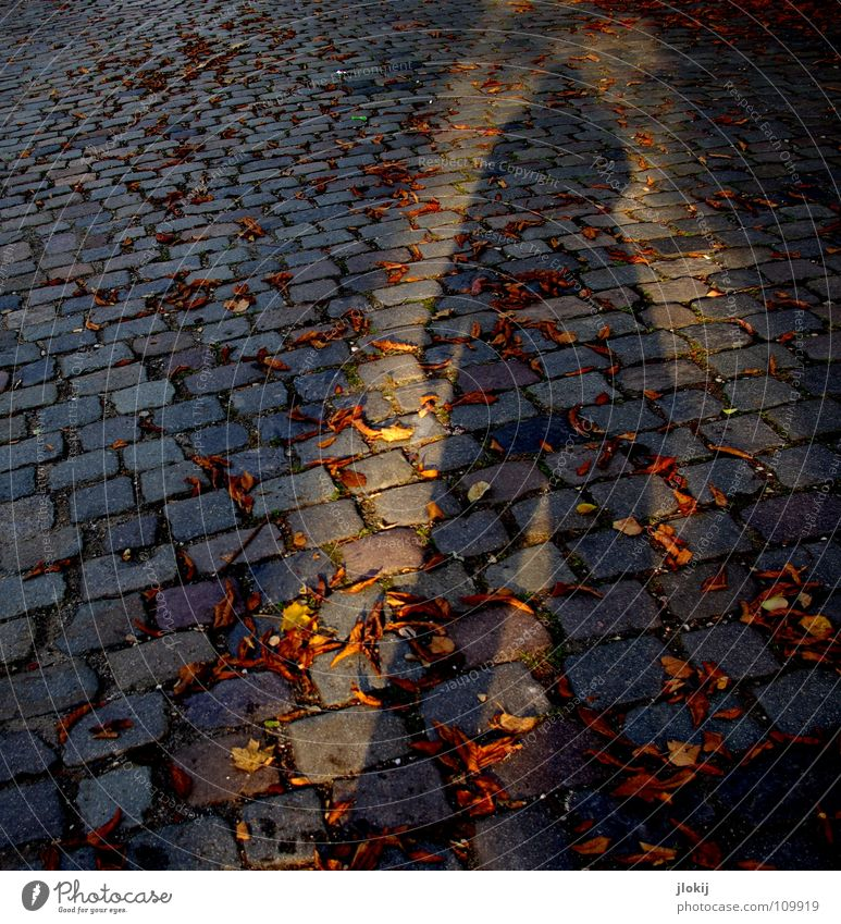 shadow Cobblestones Autumn Leaf Radiation Light Evening sun Geometry Jacket Pants Sustained Seasons Flat Traffic infrastructure Human being Stone Shadow Bright