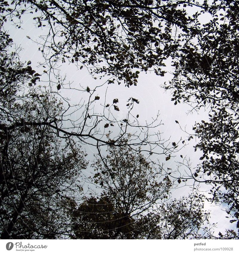 treetops Tree Autumn Forest Leaf Winter Black White Under Sky Branch Twig Nature Blue Shadow Tall