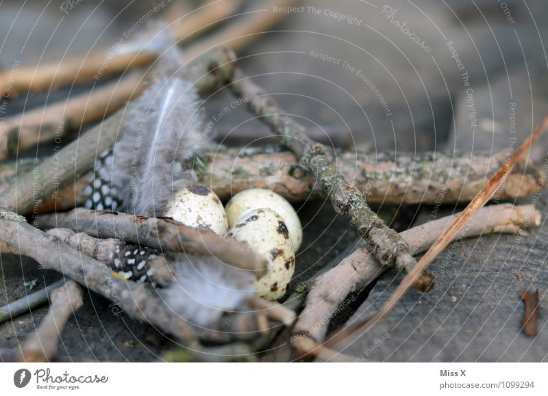 Animal Small Bird Branch Easter Metal coil Twig Egg Nest Twigs and branches Eyrie Easter egg nest Love and security Quail's egg Bird's egg