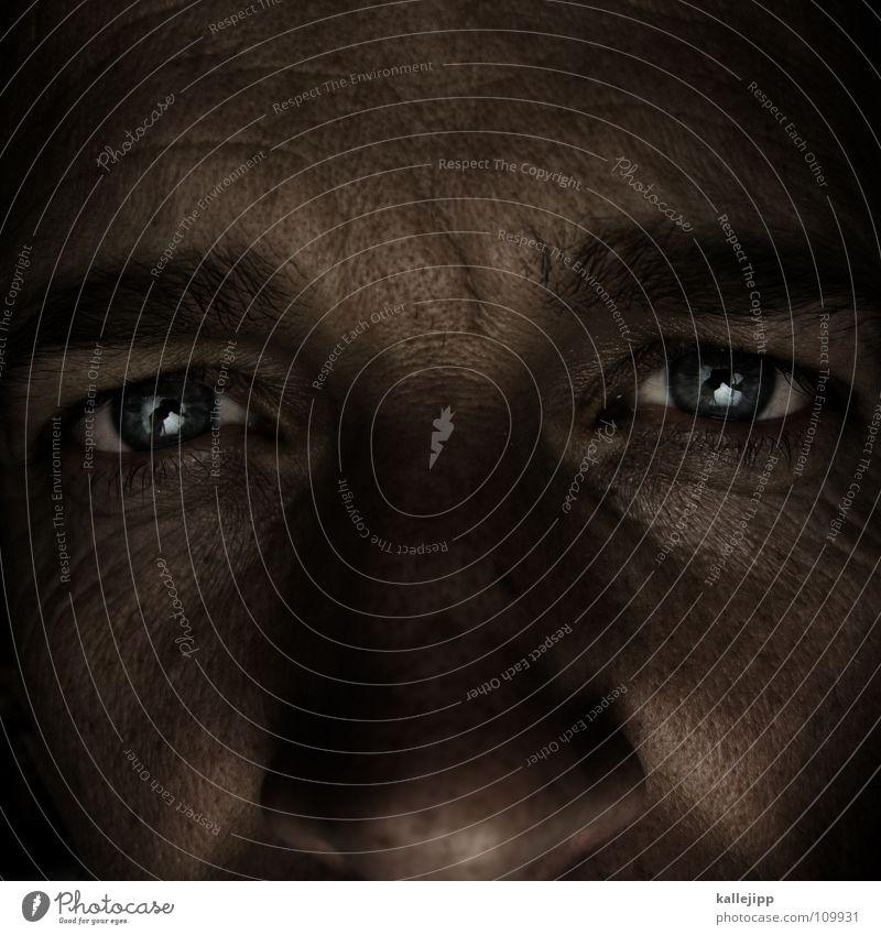 Human being Man Blue Eyes Life Hair and hairstyles Skin Living thing Wrinkles Senses Freckles Eyelash Eyebrow Lens Pupil Iris