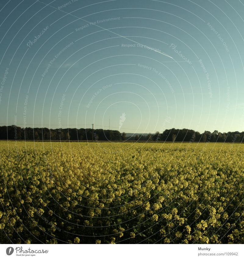 idyllic Idyll Canola Yellow Green Airplane Vapor trail Forest Plant Square Sky Field Agriculture Landscape Blue Bright condensation Detail idyllically seed flax