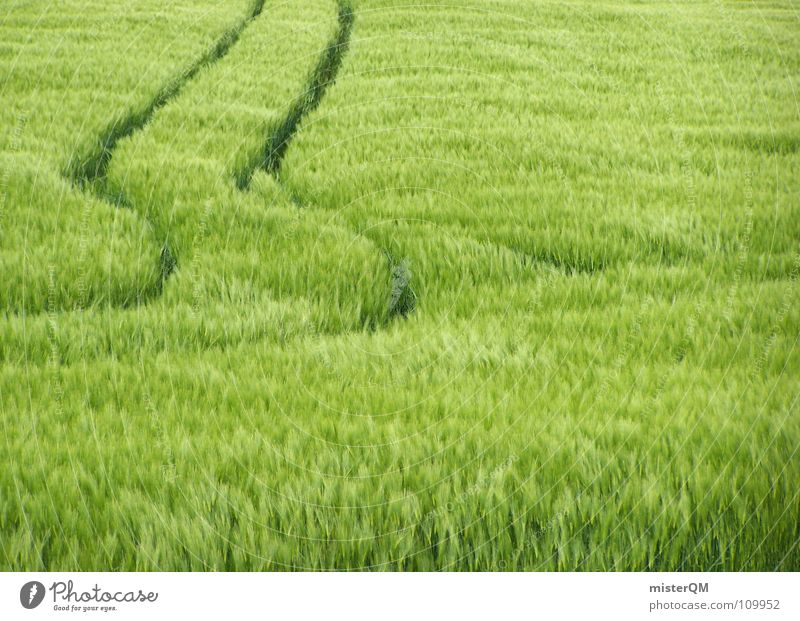 keep straight on Field Green Exit route To go for a walk Hiking Footpath Whereto Wind chime Stripe Pattern Skid marks Traffic lane Calm Midday Wheat Oats Rye