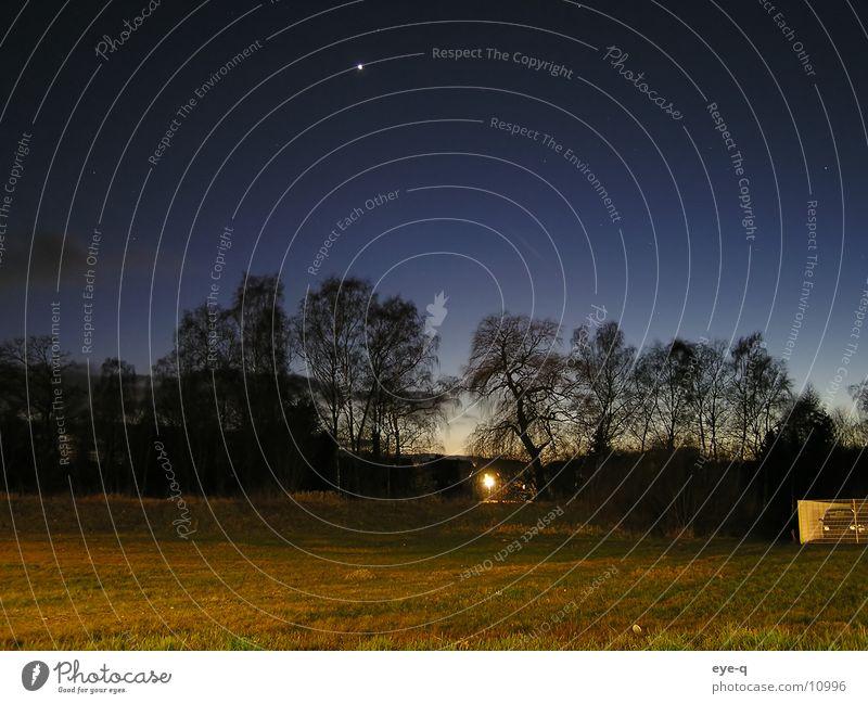 Forest Dark Meadow Lighting Stars Horizon Starry sky
