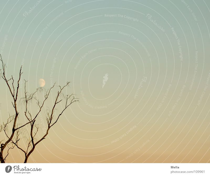 moon tree Tree Evening Leafless Autumn Pastel tone Calm Sky Moon Blue Orange Branch Twig Contrast Silhouette