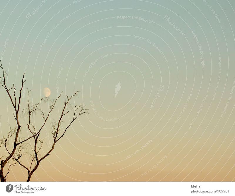 Sky Tree Blue Calm Autumn Orange Branch Moon Twig Pastel tone Leafless