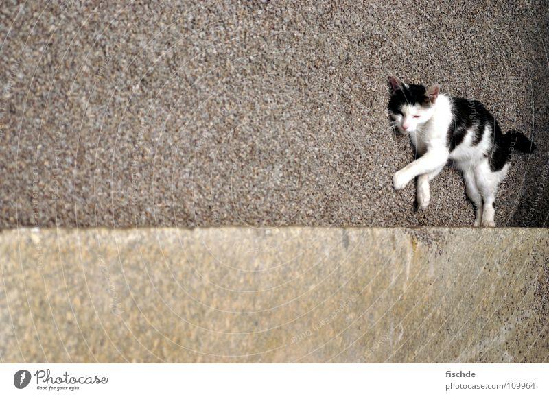 White Calm Black Animal Relaxation Stone Cat Concrete Lie Mammal Gravel Domestic cat