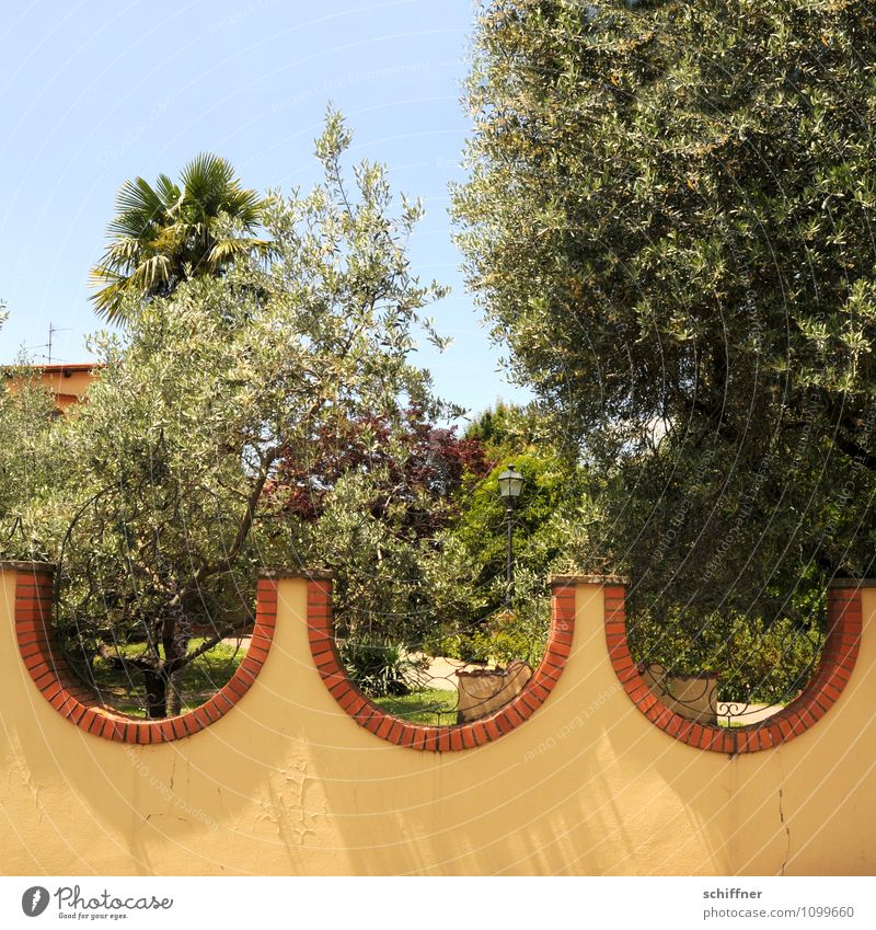 swell Summer Beautiful weather Plant Tree Exotic Garden Park Waves Yellow Swell Olive tree Palm tree Property Wall (barrier) Undulation Garden fence