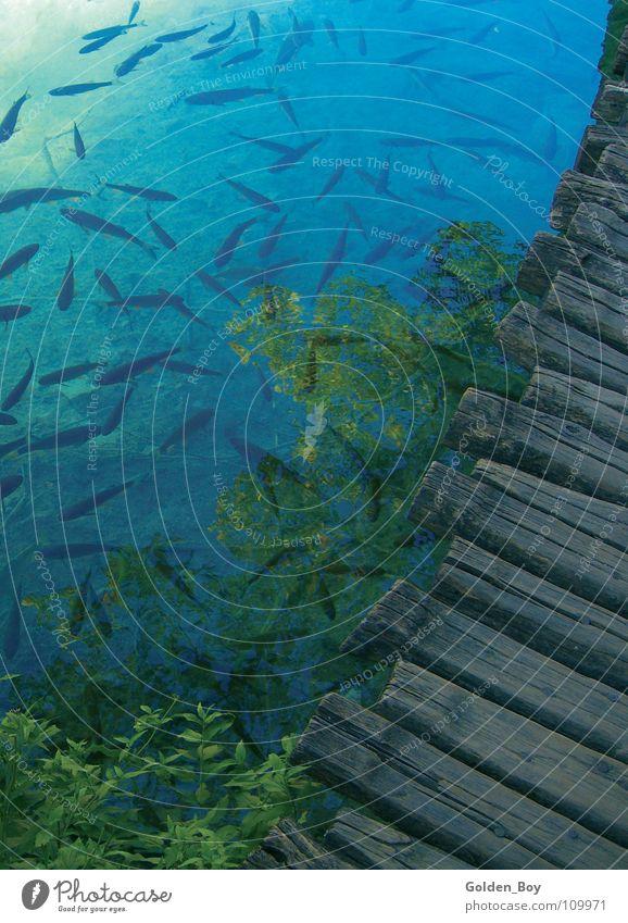 Nature Green Blue Plant Wood Lake Fish Footbridge
