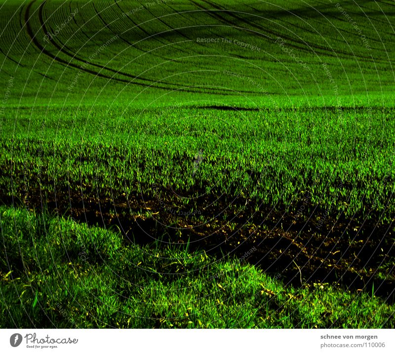Calm Far-off places Dark Autumn Grass Sand Field Earth Perspective Growth Tracks