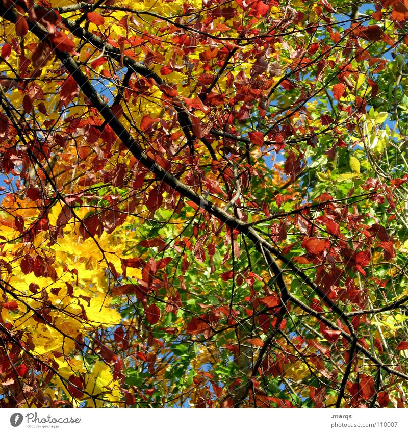 Colorful mess Tree Branchage Multicoloured Autumn Leaf Forest Growth Juicy Force Photosynthesis Plant Botany Undergrowth Yellow Red Green Wood Wood flour Nature