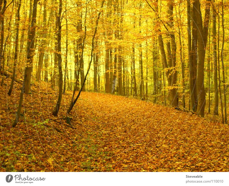 Nature Relaxation Landscape Leaf Calm Forest Autumn Moody To go for a walk Seasons Automn wood