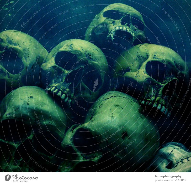 In the depth Skeleton Brain and nervous system Disastrous Poisoned Drown Ocean Bottom of the sea Algae Creepy Horror film Fear Nightmare Grave Cemetery