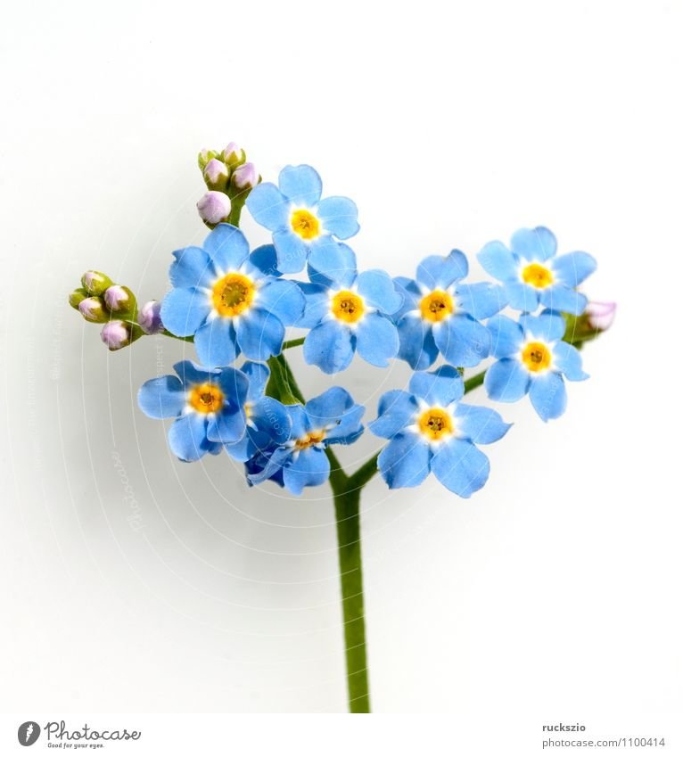 Nature Blue Plant White Water Flower Blossom Lake Germany Free Still Life Pond Narrow Damp Marsh Blow