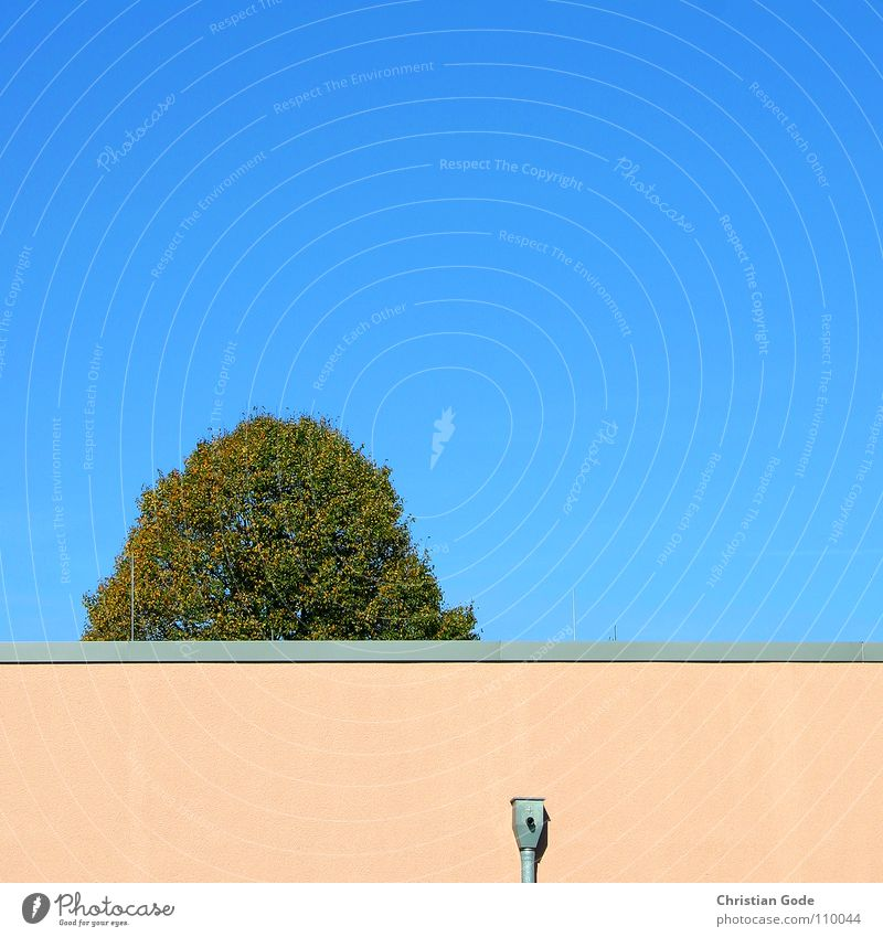 Sky Tree Green Blue Autumn Wall (barrier) Architecture Pink Corner Parking lot Treetop Supermarket Ventilation