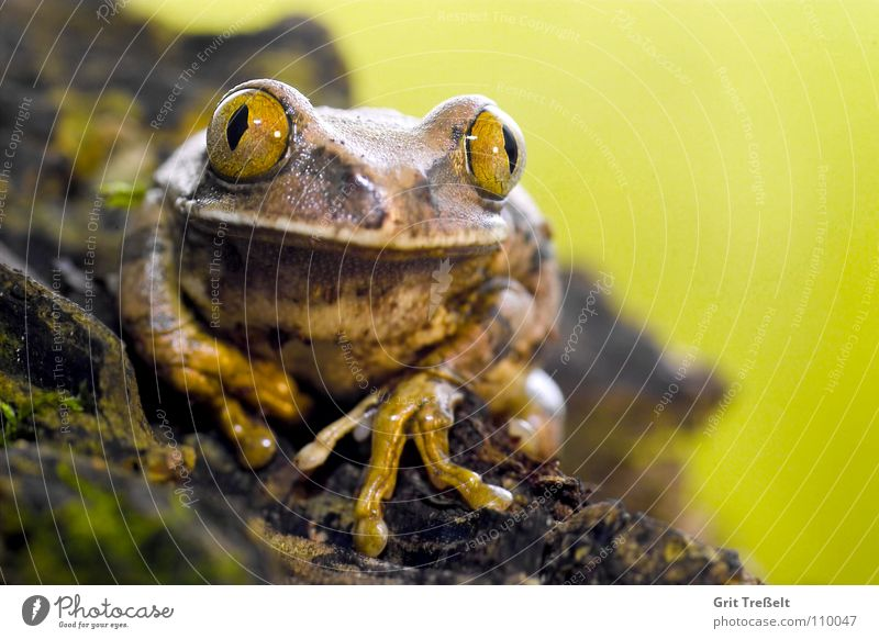 Nature Eyes Frog Pet Stick Amphibian Terrarium Animal