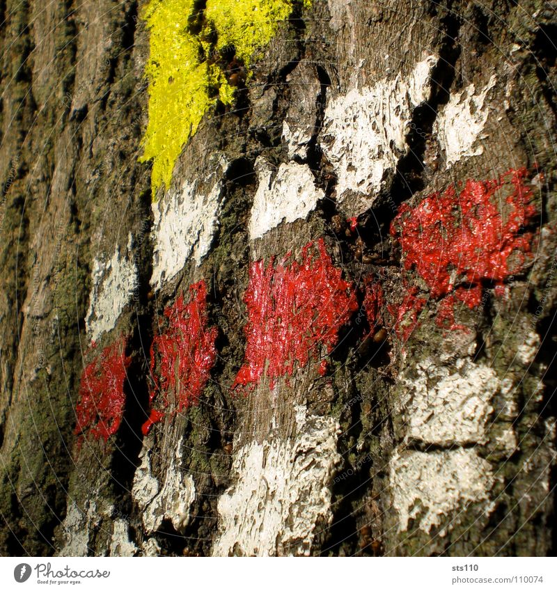 White Tree Red Yellow Colour Communicate Target Sign Direction Symbols and metaphors Tree trunk Road marking Tree bark