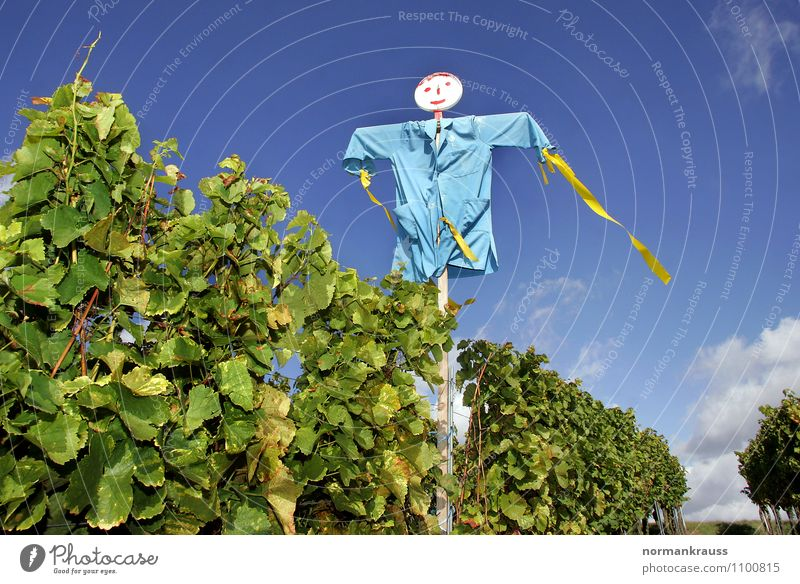 scarecrow Environment Nature Plant Sky Doll Creepy Hideous Blue Violet Fear Whimsical Scarecrow Autumn frighten away bird defense Vine Vineyard Colour photo