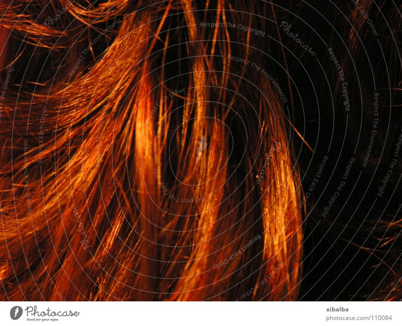 Red Colour Hair and hairstyles Orange Glittering Curl Strand of hair