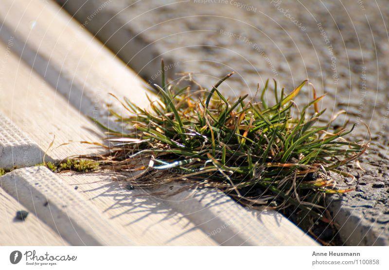 Nature Plant Green Sun Environment Meadow Grass Gray Stone Brown Growth Power Success Concrete Joie de vivre (Vitality) Might