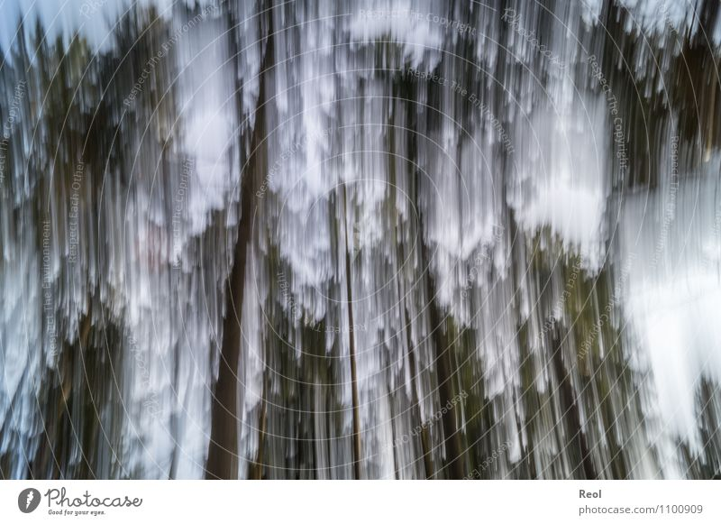 Falling Nature Climate change Forest Movement Sharp-edged Black White Whimsical Irritation Motion blur Background picture Abstract To fall Vertigo Giddy Rotate