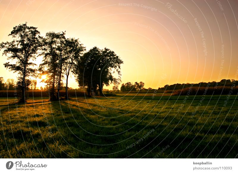 Tree Sun Calm Relaxation Landscape Meadow Autumn Warm-heartedness Beautiful weather Joie de vivre (Vitality) Harmonious Safety (feeling of)