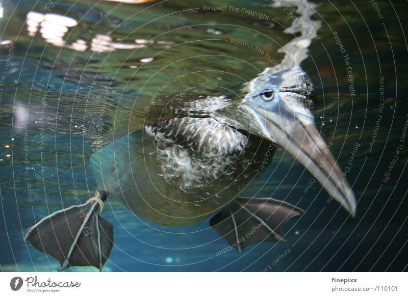 Water Green Blue Joy Ocean Loneliness Eyes Animal Underwater photo Relaxation Dark Laughter Sadness Legs Lake Bright
