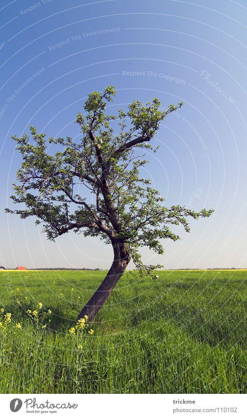 Nature Sky Tree Flower Green Blue Calm Leaf Loneliness Dark Grass Freedom Wood Empty Branch Infinity