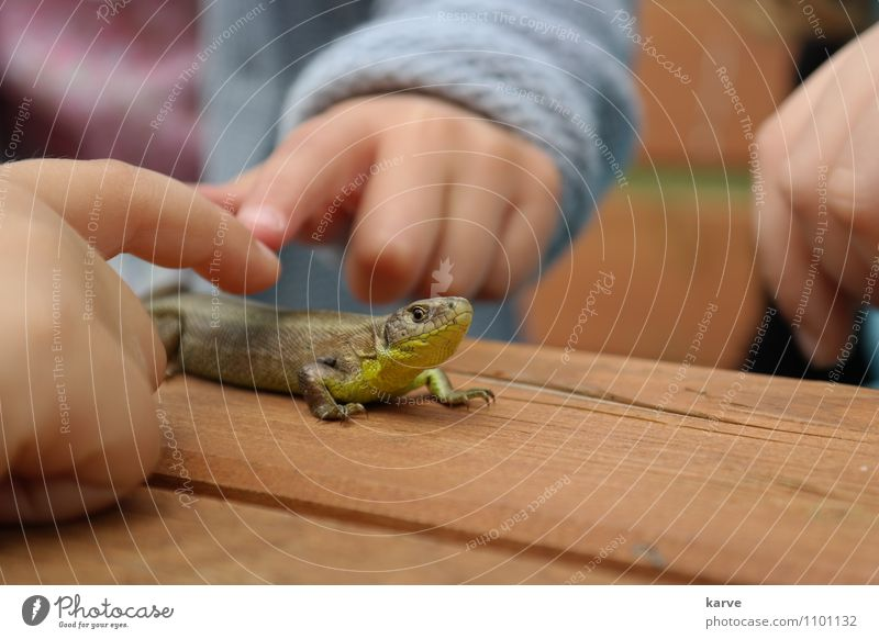 Animal Life Infancy Touch Discover Senses Scales Lizards